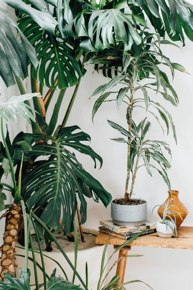 1000 Ideas About Tropical House Plants On Pinterest