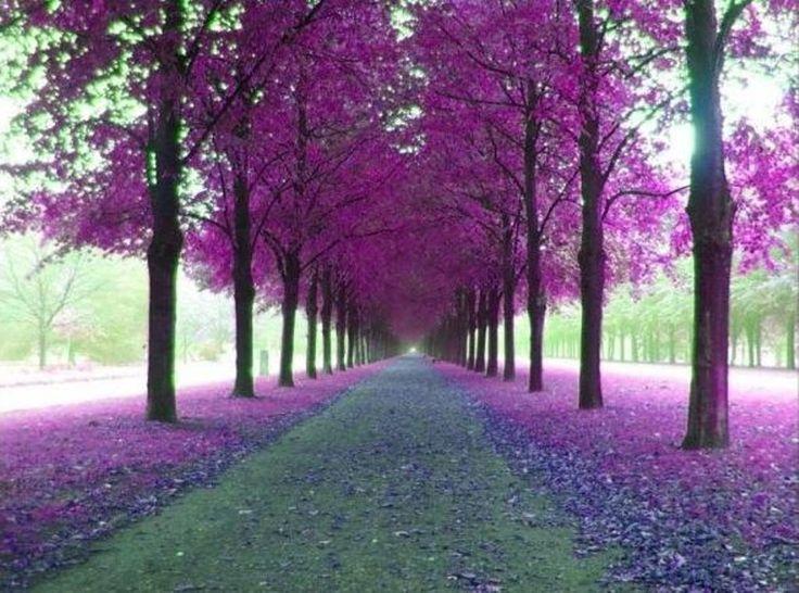 istanbul, erguvan trees