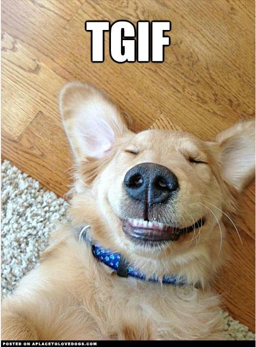 tgif funny animals - photo #4