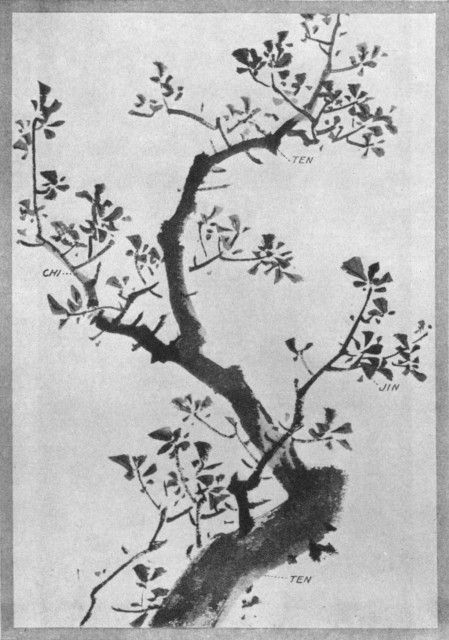 A Tree and Its Parts. Plate XXI.