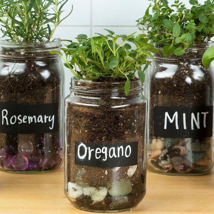 Cómo usar tarros para sembrar semillas