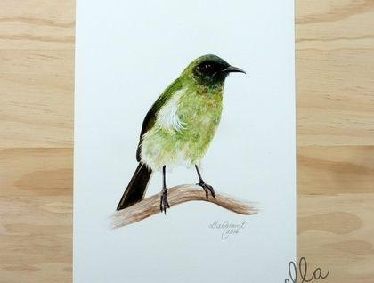 *Korimako /  Bellbird - a fine art giclee print by ellaquaint