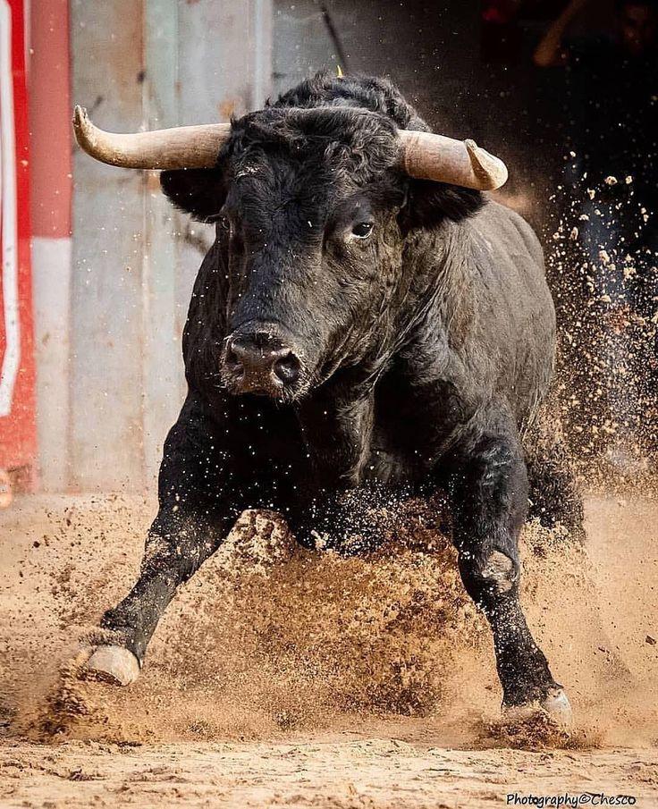 asteroid bucking bull semen - 736×905