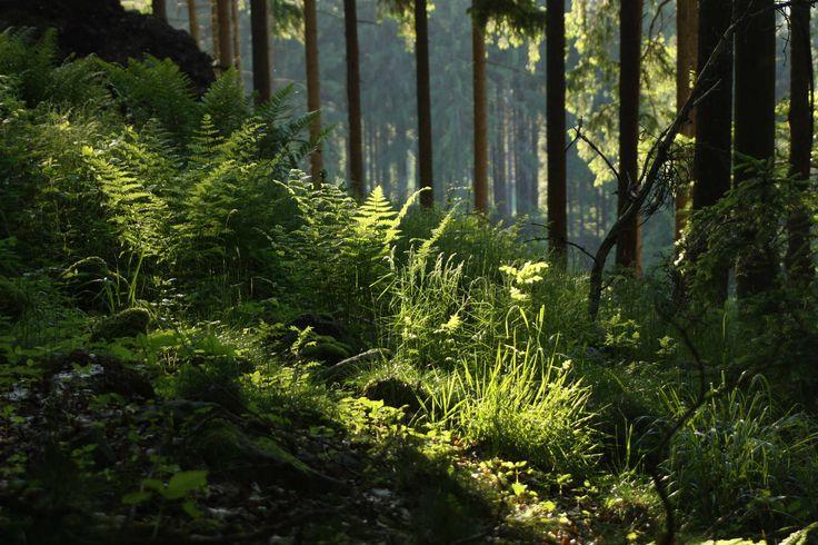 Bukovy les | Mapio.net