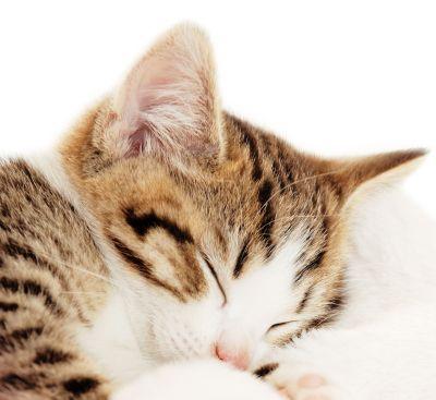 Lekker slapen!