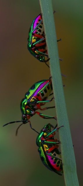 I'm researching the species...its a beetle, which means this could take a long time...unless they are photoshopped....