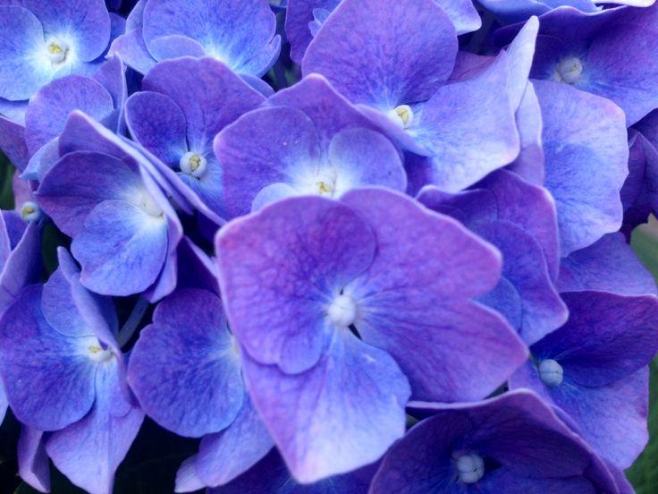 Different Varieties of Flowers in Claudia's Garden - Pictures