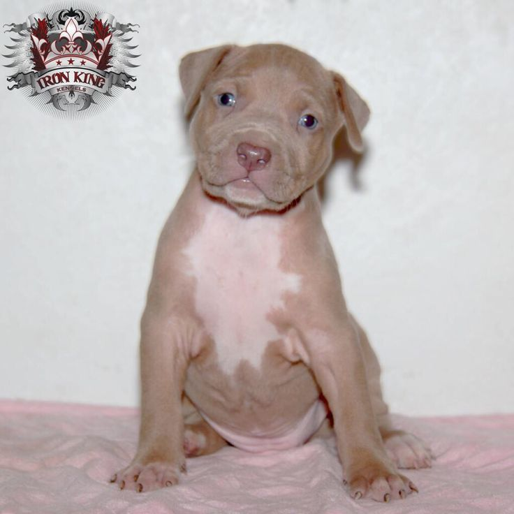 female a from moose and aphrodite at 4 weeks only a few left from this litter