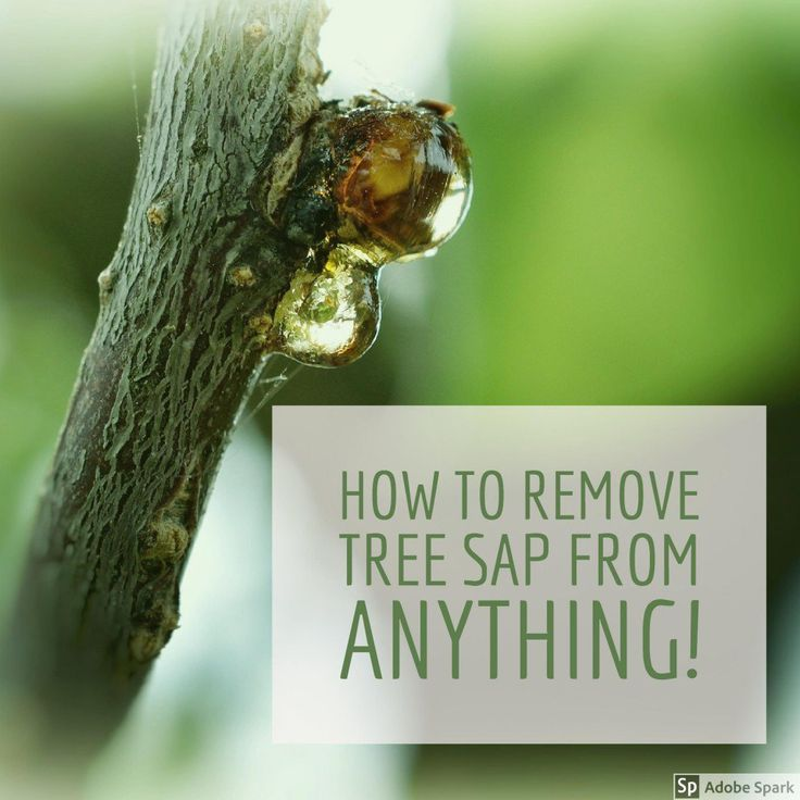 How to Remove Sticky Tree Sap or Pine Pitch From Almost