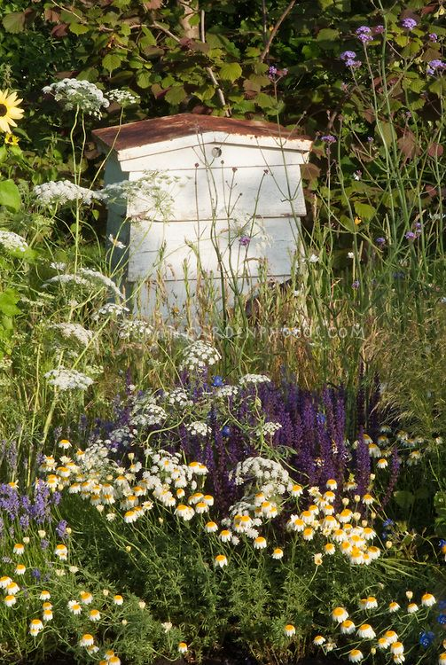 Beehive integrated into the garden with flowers and wildflowers nearby #HeathcoteIvory