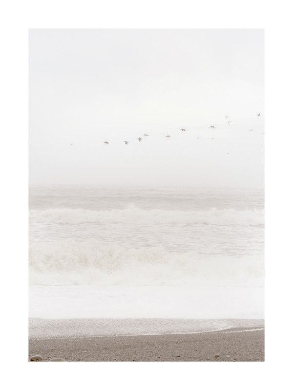Flight of the Ocean Art Print - Limited Edition by Sharon Rowan | Minted