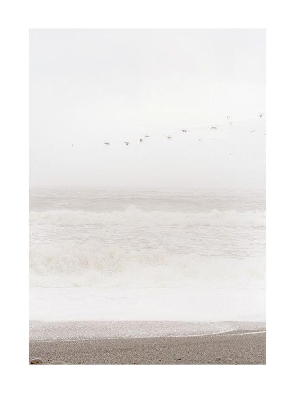 Flight of the Ocean Wall Art Prints by Sharon Rowan | Minted