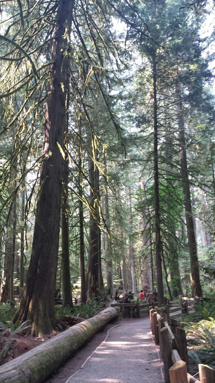 Cathedral Grove Trail  port Alberni