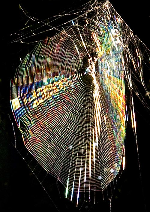 Iridescent spider-web.  Normally don't like anything spider-y, but this is beautiful.