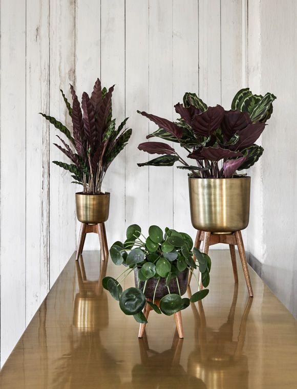 Tolle Pflanzenständer im Retro Look. Die Blumentöpfe sind eine gute Kombination aus Holz und Messing. Hier Bestellen!