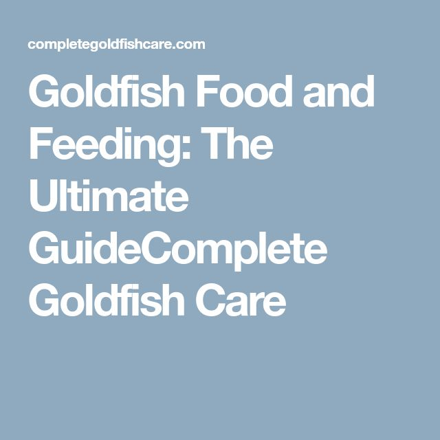 Goldfish Food and Feeding: The Ultimate GuideComplete Goldfish Care #CompleteNutrition