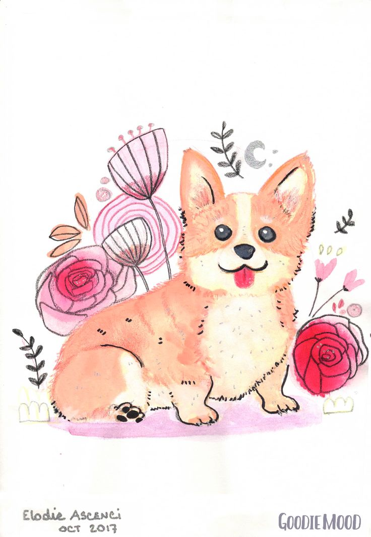 illustration d'un chien corgi à l'aquarelle et aux crayons de couleurs