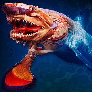 25 Best Ideas About Aquarium Discount On Pinterest Les