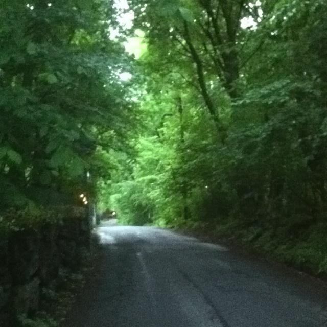 Jeg blir mer og mer glad i gamle trær og vegetasjon.