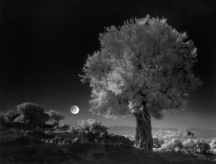 The landscapes in Celestial Nights carry an aura that is both earthly and divine. Folberg's photographs describe places where the spiritual is at once near, imprinted in the arid landscapes, and far away, in the dark, starlit recesses of space.