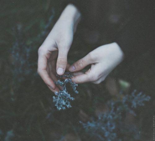 Imagem de hands, flowers, and dark