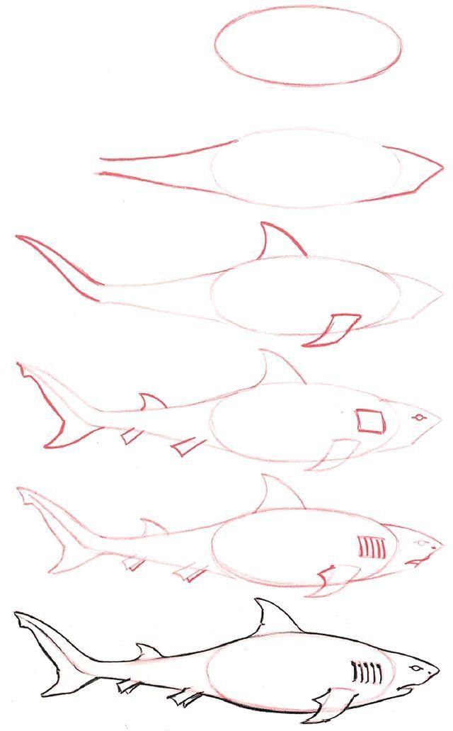 Wie ein Hai klicken Sie hier für eine vollständige Liste aller Tiere zu zeichnen kann man lernen, zeichnen 3274