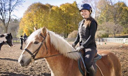 Club Hippique de Saverne à Saverne : Leçons d'équitation à Saverne: #SAVERNE 19.90€ au lieu de 36.00€ (45% de réduction)