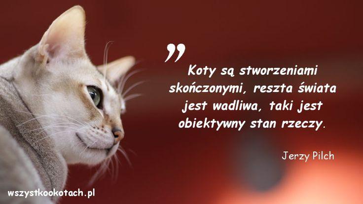 http://wszystkookotach.pl/cytaty-o-kotach-jerzy-pilch-2/