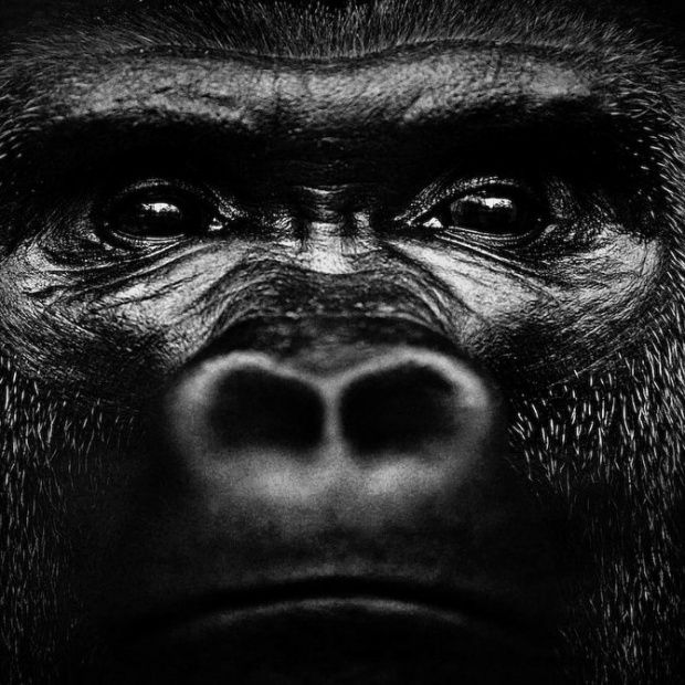 Amazing Wild Animals by Laurent Baheux