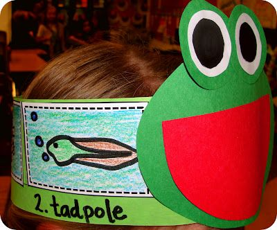 Children can understand the life cycle of a frog by making this cool frog hat.