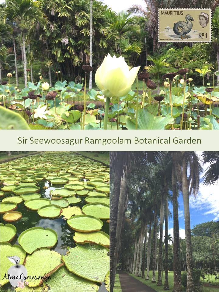 Mauritius National Botanical Garden is home to an incredible variety of tropical plants, many of them indigenous. The Botanic Garden, formally known as Sir Seewoosagur Botanic Garden, is one of the most visited attractions in Mauritius. #travel #vegan #blogger #mauritius #SirSeewoosagur #garden #botanical