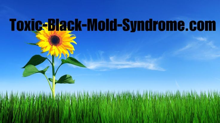 How to recognize the symptoms of black mold poisoning, how to remove the mold toxins, and how to test for toxic black mold.