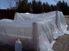 use plastic drop cloths to create a temporary greenhouse