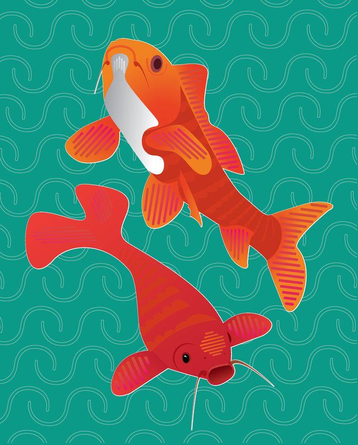 coy fish  by Noa Ward