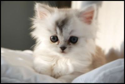 puppies and kittens pictures | Very Cute Puppies and Kittens IMAGES