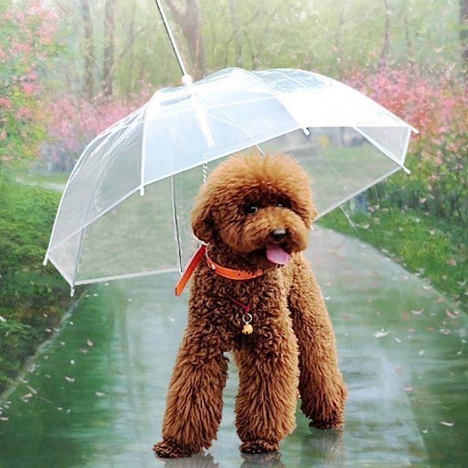 Abbiamo stilato una lista di 10 accessori inutili per il tuo cane ma che segretamente hai sempre desiderato! Scopri quali sono all'indirizzo bausocial.it e clicca sul Blog!  #BauSocial  #cane #dog #accessori #milano #rain #pioggia #ombrello #cani #dogs #lol #paws #roma #bologna #italia #torino #pescara #bari #lecce #love #friends #happy #amazing #aww #umbrella #beautiful #instadog #doglovers