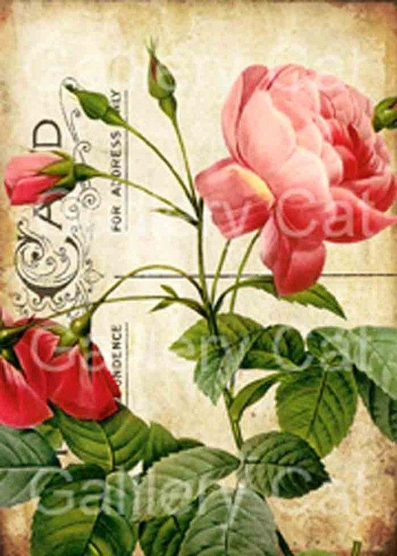 Heirloom Roses on Old Postcard  Digital Collage Sheet Instant