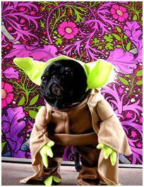 Halloween Pugs (Pugs dressed up in Halloween Costumes)