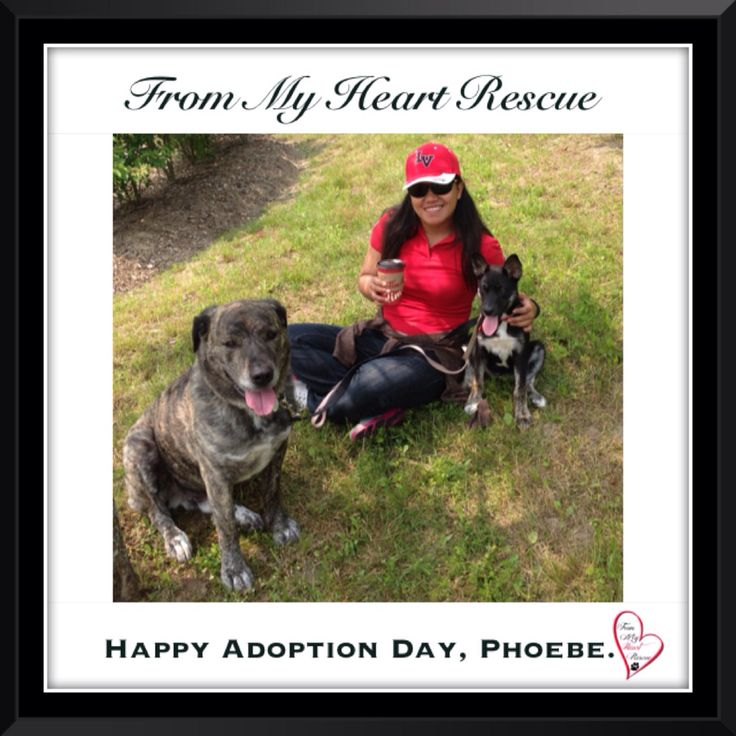 #Please ❤️+ #Pin #FMHR #FromMyHeartRescue #RescueWithoutBorders #SavingOneDogAtaTime ~ #Happy #Adoption #Day #Phoebe #Aka #Dany *Many thanks to Linda, Christa, Kim, Karen & family, for all their hard work behind the scenes. *Thank you❤️ *Info, Foster, Adoption, PayPal & e-transfer: frommyheartrescue@hotmail.com *Our Vets: Brock St. Animal Hospital/FMHR 905-430-2644 *Fundraising & Volunteering: FMHRfundraising@hotmail.com    *www.frommyheartrescue.com  *Find Us: Petfinder, FB, Twitter, IG…