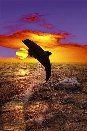 Dolphin jumping at sunset by Gail Shumway