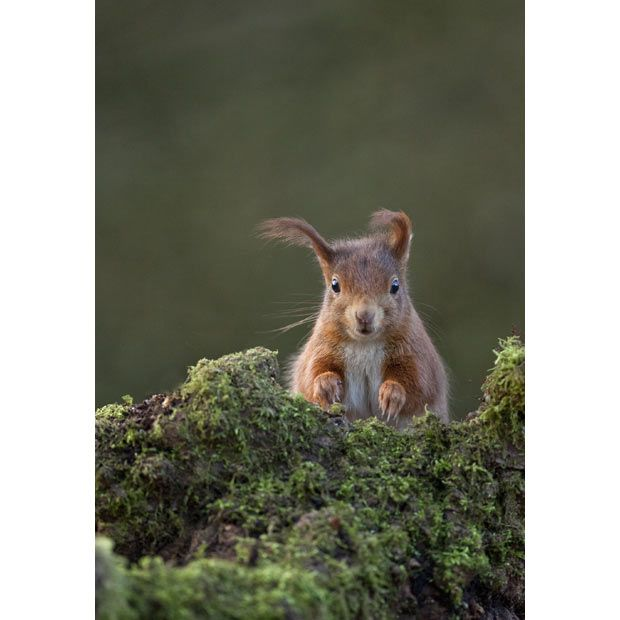.Amazing Wildlife, Current Exhibitions, Steward Ellett, Wildlife Photography, British Wildlife, Horniman Museums, Red Squirrels Windy, Beautiful Creatures, Adorable Animal
