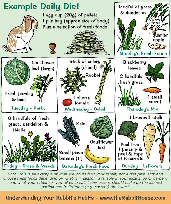 As an example, a rabbit could have 1 egg cup of pellets and a pile of hay per day, plus a selection of vegetables. One day it might be a cauliflower leaf and fresh basil/parsley and another day blackberry leaves, fresh grass and a small carrot.