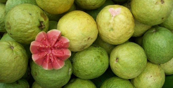 Guava : The Tropical fruit