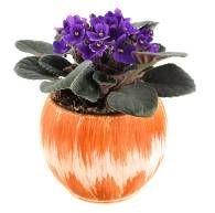 african violet plants, african violet pots