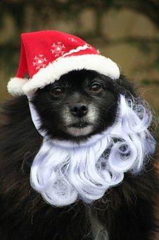 Dog, Santa, Pet, Animal, Christmas