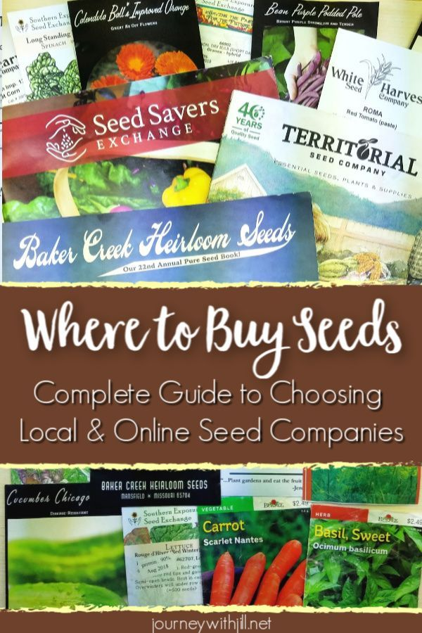 Where To Buy Seeds Buy Seeds Organic Vegetable Garden