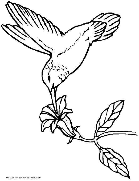 hummingbird coloring book page this hummingbird is drinking from a tropical flower you will find a lot more birds coloring pages in the gallery - Bird Coloring Book