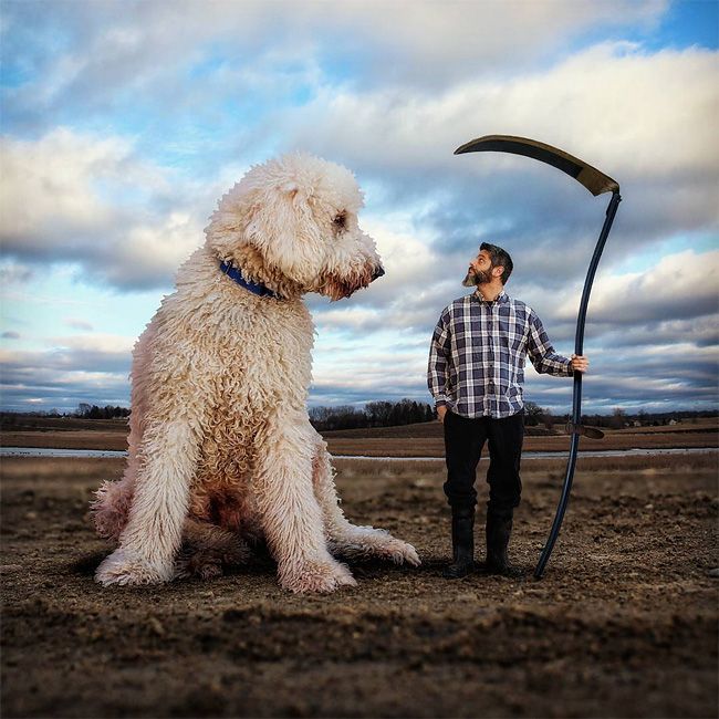 Christopher Cline of Virginia Photoshops Juji, his goldendoodle, into his pictures...and the results are incredible.