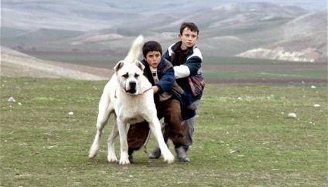 Σκέψεις: Τα 100 χρόνια ελληνικού κινηματογράφου γιορτάζει φ...