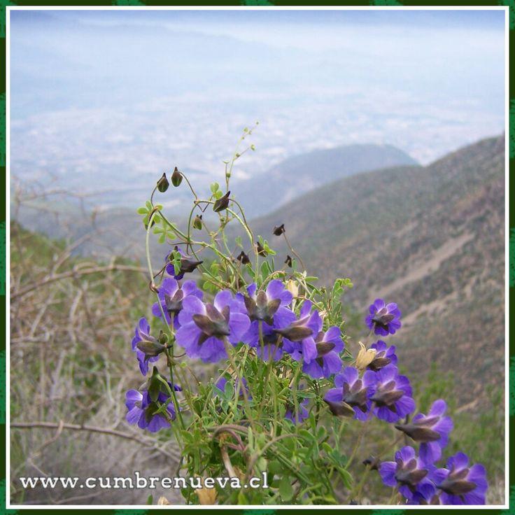 Mientras subimos al cerro La Giganta....